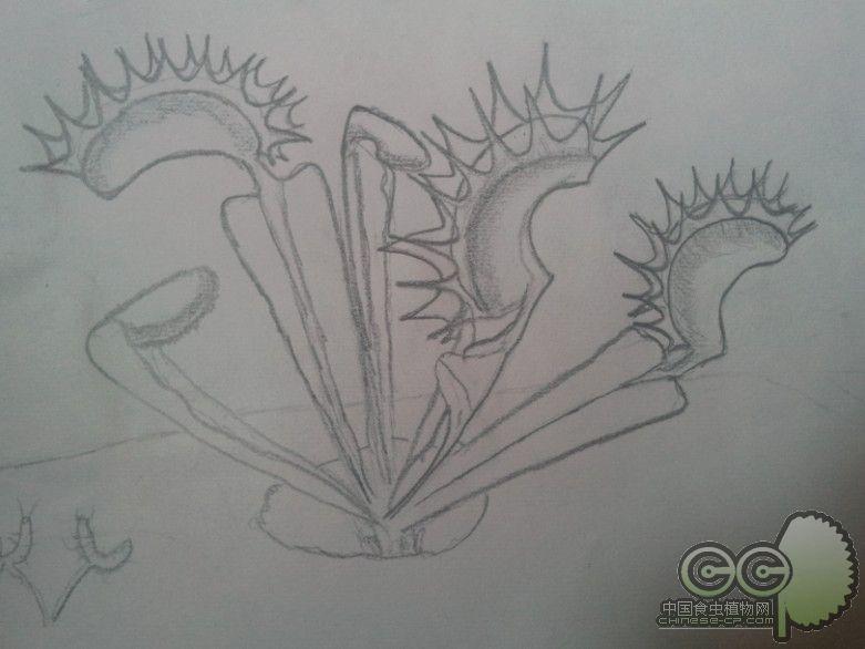 简笔画 手绘 素描 线稿 781_586