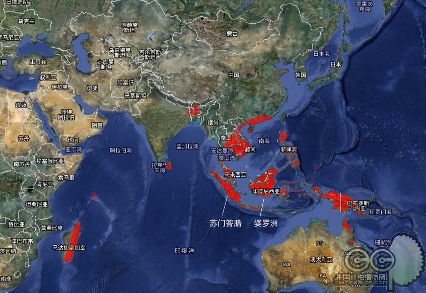 猪笼草属热带植物,主产东南亚各国和大洋洲的巴布亚新几内亚,以婆罗洲图片